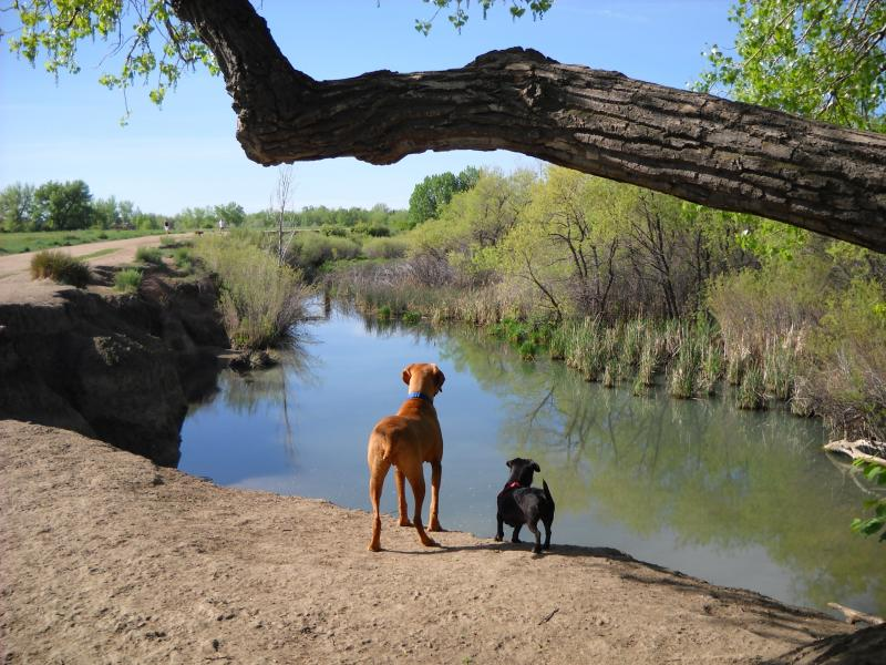 Castle Rock Dog Park