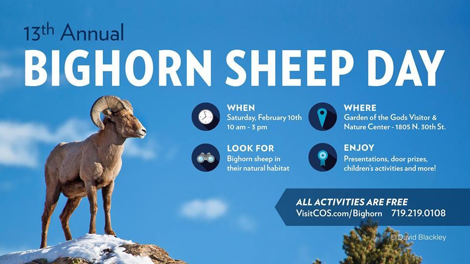 bighorn sheep day