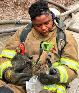 save a cat